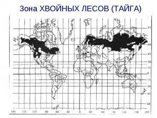 Зона ХВОЙНЫХ ЛЕСОВ (ТАЙГА)