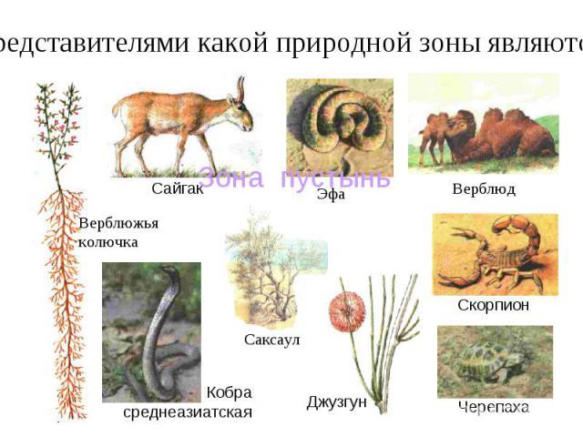 Представителями какой природной зоны являются: