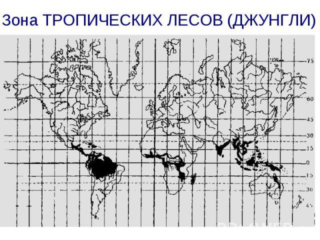 Зона ТРОПИЧЕСКИХ ЛЕСОВ (ДЖУНГЛИ)