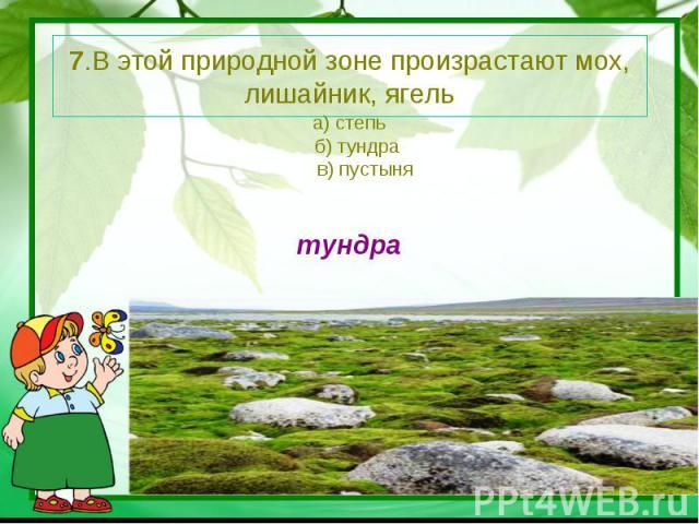 7.В этой природной зоне произрастают мох, лишайник, ягель а) степь б) тундра в) пустынятундра