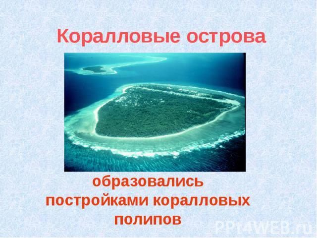 Коралловые острова образовались постройками коралловых полипов
