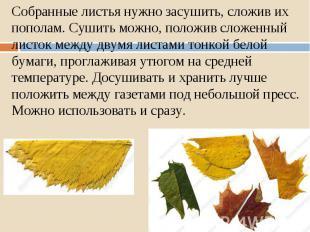 Собранные листья нужно засушить, сложив их пополам. Сушить можно, положив сложен
