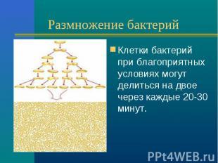 Размножение бактерий Клетки бактерий при благоприятных условиях могут делиться н