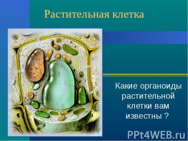 Растительная клетка Какие органоиды растительной клетки вам известны ?