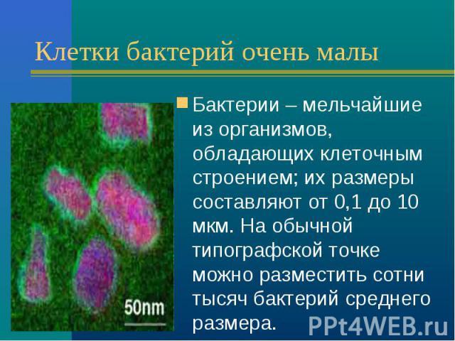 Клетки бактерий очень малы Бактерии – мельчайшие из организмов, обладающих клеточным строением; их размеры составляют от 0,1 до 10 мкм. На обычной типографской точке можно разместить сотни тысяч бактерий среднего размера.