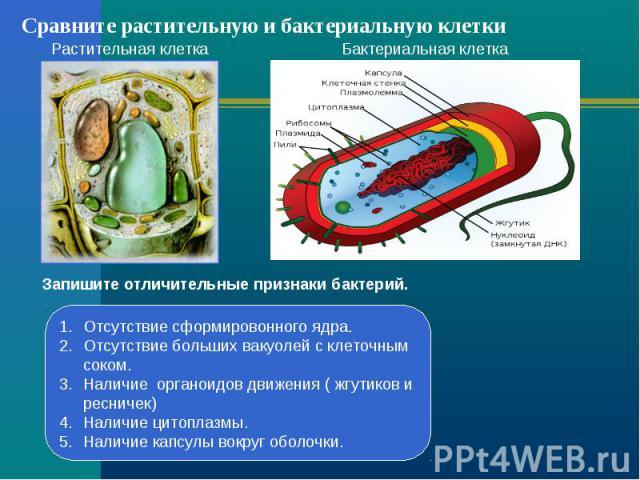 Сравните растительную и бактериальную клетки Растительная клеткаБактериальная клеткаЗапишите отличительные признаки бактерий.Отсутствие сформировонного ядра.Отсутствие больших вакуолей с клеточным соком.Наличие органоидов движения ( жгутиков и ресни…