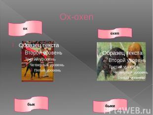Ox-oxen