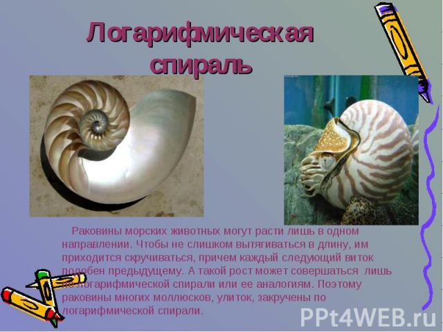Логарифмическая спираль Раковины морских животных могут расти лишь в одном направлении. Чтобы не слишком вытягиваться в длину, им приходится скручиваться, причем каждый следующий виток подобен предыдущему. А такой рост может совершаться лишь по лога…