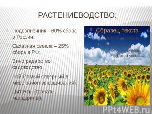РАСТЕНИЕВОДСТВО: Подсолнечник – 60% сбора в России;Сахарная свекла – 25% сбора в