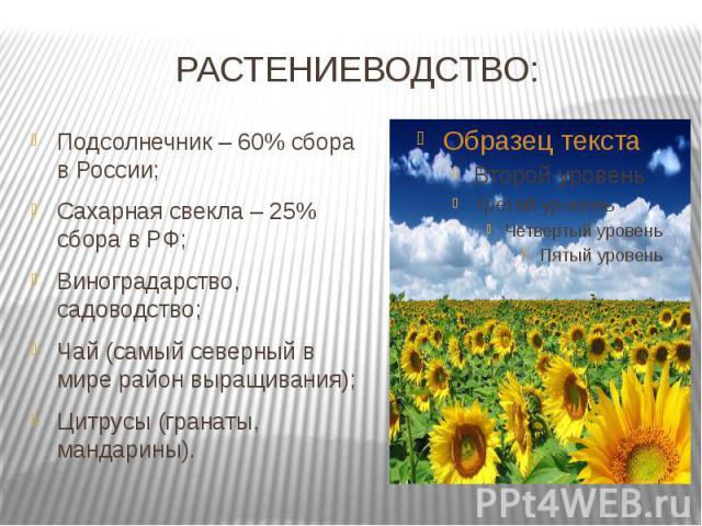 РАСТЕНИЕВОДСТВО: Подсолнечник – 60% сбора в России;Сахарная свекла – 25% сбора в РФ;Виноградарство, садоводство;Чай (самый северный в мире район выращивания);Цитрусы (гранаты, мандарины).