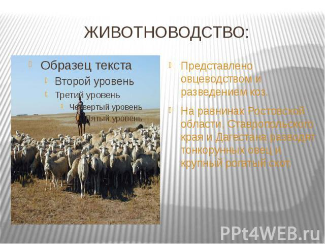 ЖИВОТНОВОДСТВО: Представлено овцеводством и разведением коз.На равнинах Ростовской области, Ставропольского края и Дагестана разводят тонкорунных овец и крупный рогатый скот.