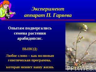 Экспериментаппарат П. ГаряеваОпытам подвергались семена растения арабидопсис.ВЫВ