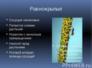 Равнокрылые Сосущие насекомыеПитаются соками растенийРазвитие с неполным превращ