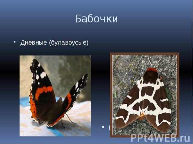 Бабочки Дневные (булавоусые)Ночные (перистоусые)