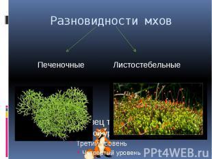 Разновидности мхов ПеченочныеЛистостебельные