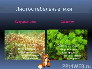 Листостебельные мхи Кукушкин ленСфагнум