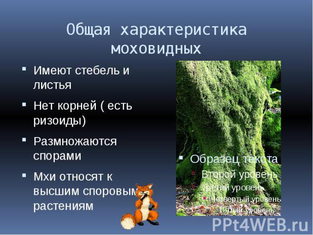 Общая характеристика моховидных Имеют стебель и листьяНет корней ( есть ризоиды)Размножаются спорамиМхи относят к высшим споровым растениям