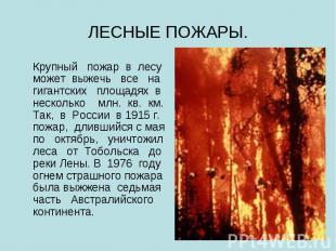 ЛЕСНЫЕ ПОЖАРЫ. Крупный пожар в лесу может выжечь все на гигантских площадях в не