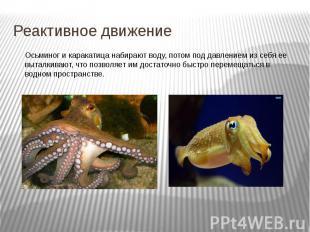 Реактивное движение Осьминог и каракатица набирают воду, потом под давлением из