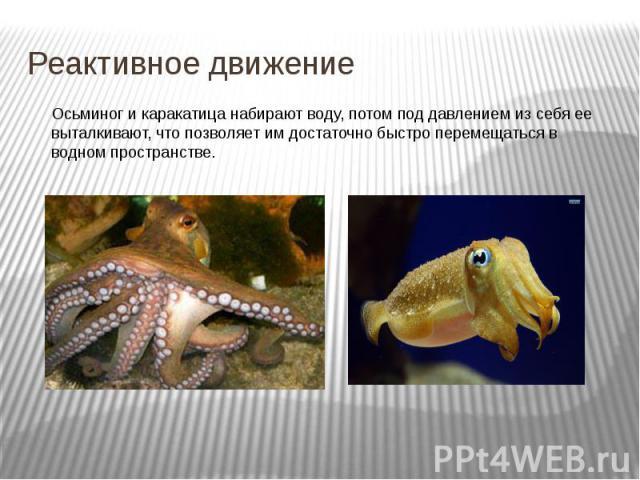 Реактивное движение Осьминог и каракатица набирают воду, потом под давлением из себя ее выталкивают, что позволяет им достаточно быстро перемещаться в водном пространстве.
