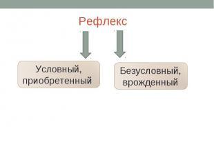 Рефлекс Условный, приобретенный Безусловный,врожденный