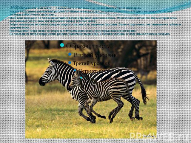 Зебра: На самом деле зебра — чёрная в белую полоску, а не наоборот, как считают некоторые.Каждая зебра имеет уникальный рисунок из чёрных и белых полос, подобно отпечаткам пальцев у человека. По рисунку детёныш зебры узнаёт свою мать.Мухи цеце напад…
