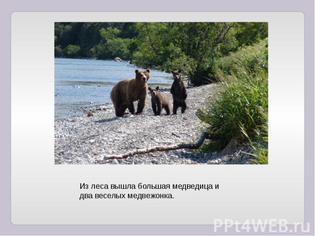 Из леса вышла большая медведица и два веселых медвежонка.