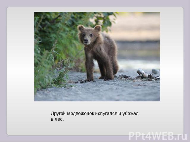 Другой медвежонок испугался и убежал в лес.