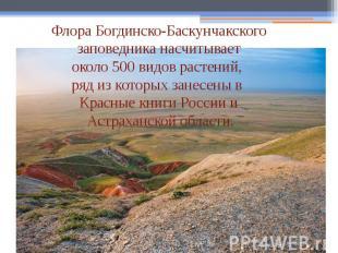 Флора Богдинско-Баскунчакского заповедника насчитывает около 500 видов растений,