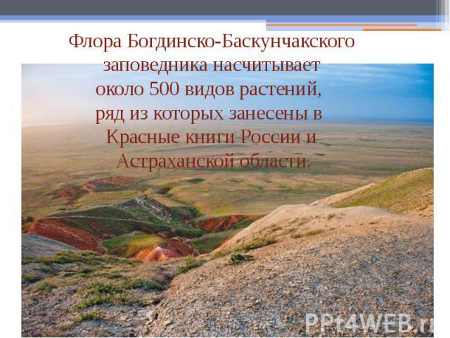 Флора Богдинско-Баскунчакского заповедника насчитывает около 500 видов растений, ряд из которых занесены в Красные книги России и Астраханской области.