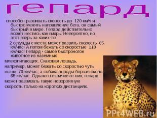 гепард способен развивать скорость до 120 км/ч и быстро менять направление бега,