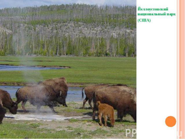 Йеллоустонский национальный парк (США)