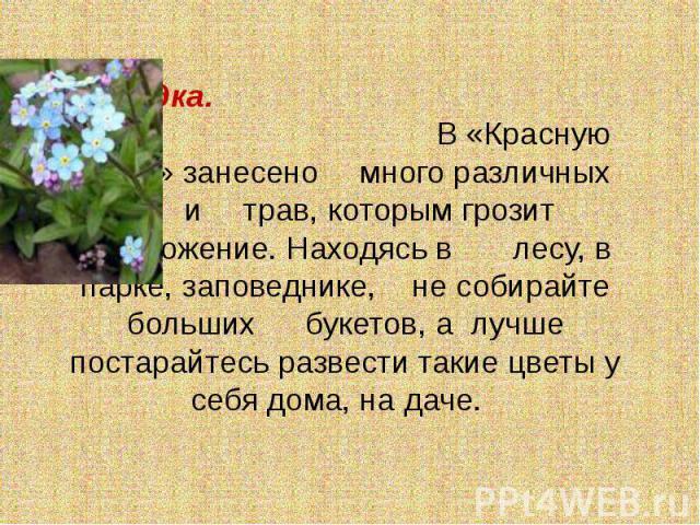 Незабудка. В «Красную книгу» занесено много различных цветов и трав, которым грозит уничтожение. Находясь в лесу, в парке, заповеднике, не собирайте больших букетов, а лучше постарайтесь развести такие цветы у себя дома, на даче.