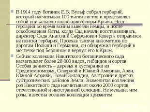 В 1914 году ботаник Е.В. Вульф собрал гербарий, который насчитывал 100 тысяч лис