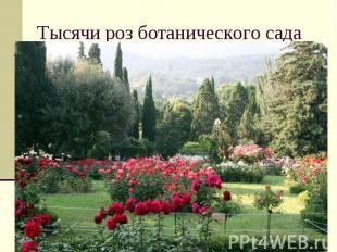 Тысячи роз ботанического сада