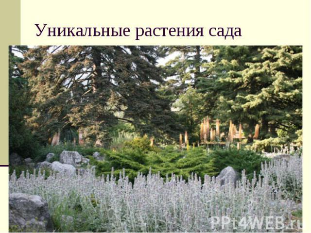 Уникальные растения сада