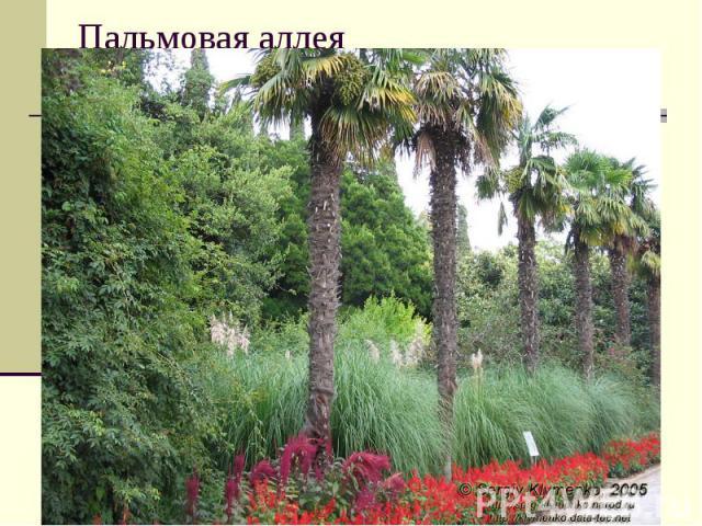 Пальмовая аллея