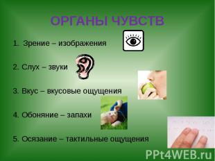 ОРГАНЫ ЧУВСТВ Зрение – изображения 2. Слух – звуки 3. Вкус – вкусовые ощущения 4