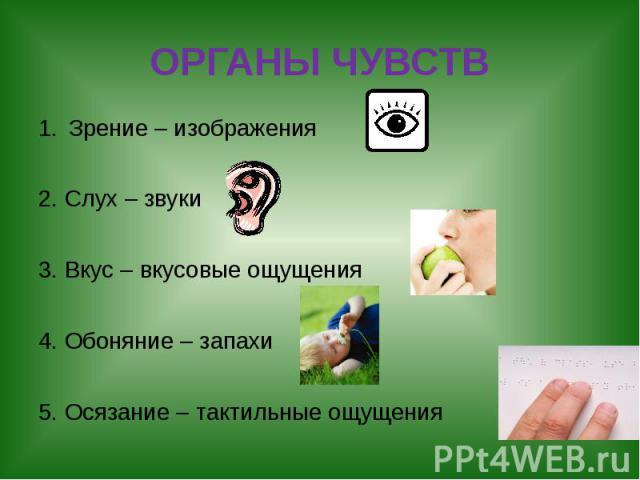 ОРГАНЫ ЧУВСТВ Зрение – изображения 2. Слух – звуки 3. Вкус – вкусовые ощущения 4. Обоняние – запахи 5. Осязание – тактильные ощущения