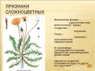 Признаки сложноцветных Жизненная форма – однолетние или многолетние травыСоцвети