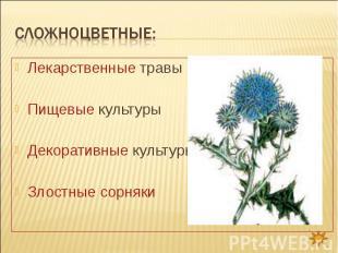 Сложноцветные: Лекарственные травыПищевые культурыДекоративные культурыЗлостные