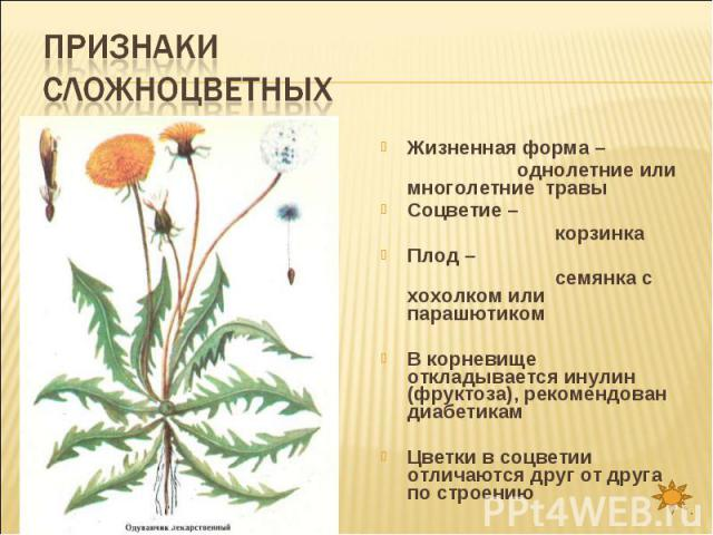 Признаки сложноцветных Жизненная форма – однолетние или многолетние травыСоцветие – корзинкаПлод – семянка с хохолком или парашютикомВ корневище откладывается инулин (фруктоза), рекомендован диабетикамЦветки в соцветии отличаются друг от друга по строению