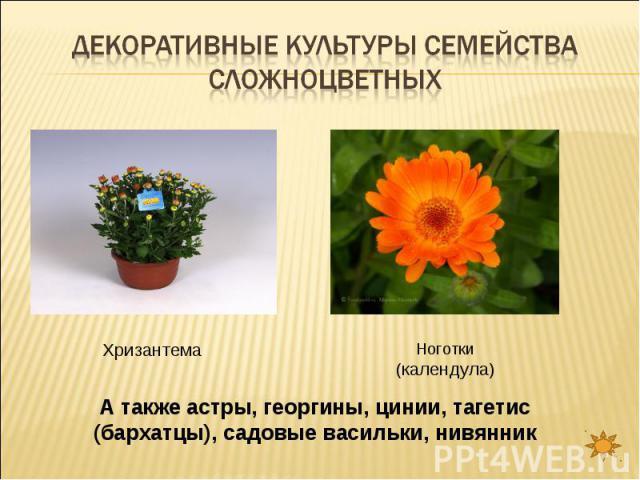 Декоративные культуры семейства сложноцветных ХризантемаНоготки (календула)А также астры, георгины, цинии, тагетис (бархатцы), садовые васильки, нивянник