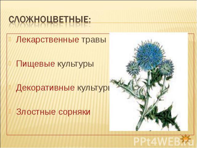 Сложноцветные: Лекарственные травыПищевые культурыДекоративные культурыЗлостные сорняки