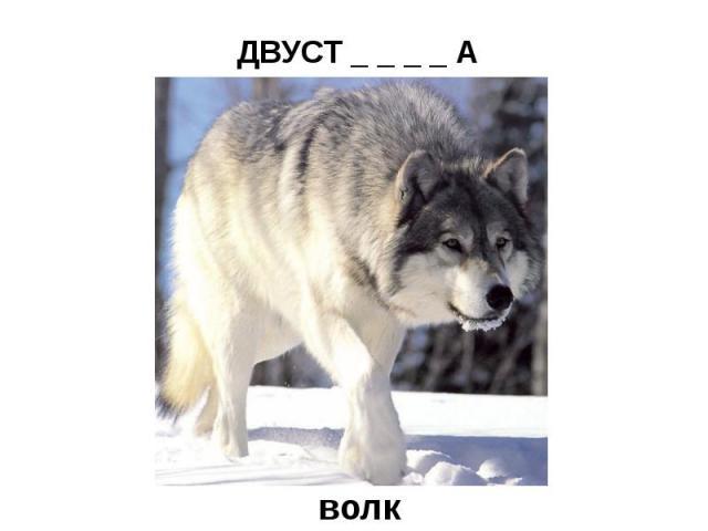 ДВУСТ _ _ _ _ А (охотничье ружьё)волк