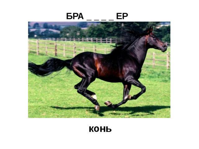 БРА _ _ _ _ ЕР (охотник вне закона)конь