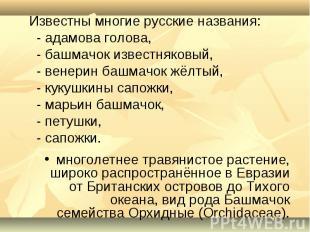 Известны многие русские названия: - адамова голова, - башмачок известняковый, -