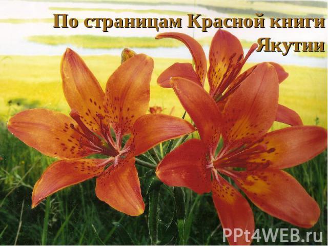 По страницам Красной книгиЯкутии