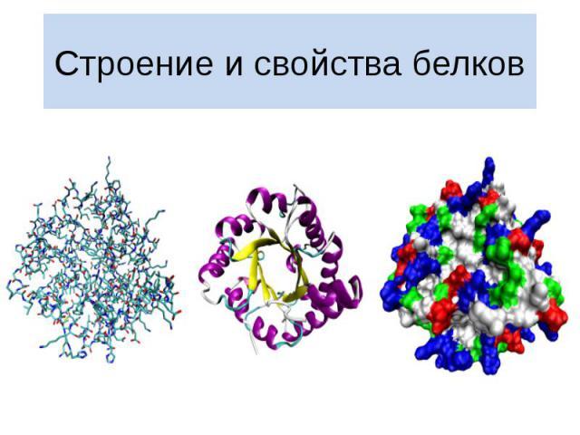 Строение и свойства белков