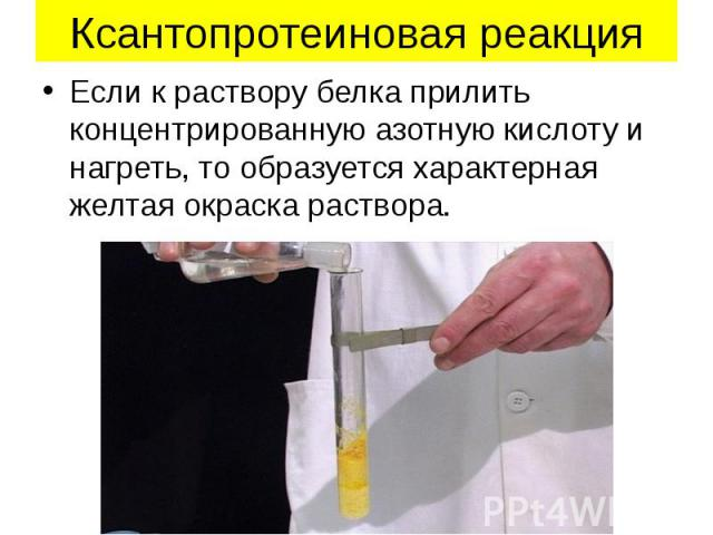 Ксантопротеиновая реакция Если к раствору белка прилить концентрированную азотную кислоту и нагреть, то образуется характерная желтая окраска раствора.